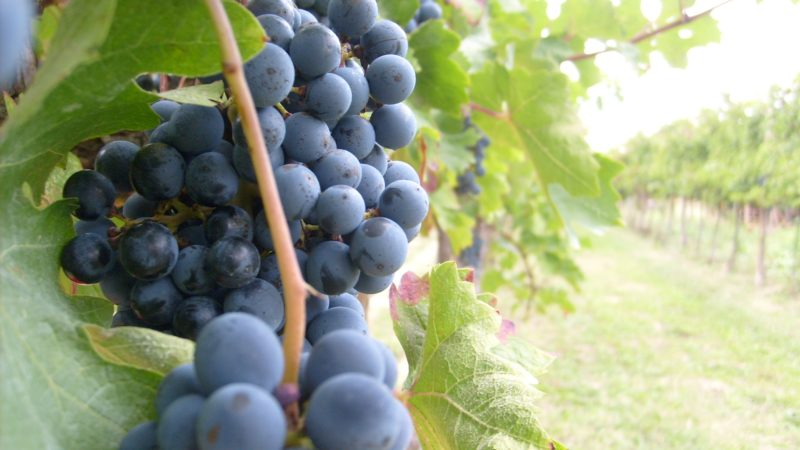 RADICI DEL SUD 2020. Salone dei vini e degli oli del Sud
