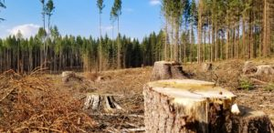 Ambiente e territorio - Giulia Lupoli - Energie rinnovabili o ritorno ai combustibili fossili 2